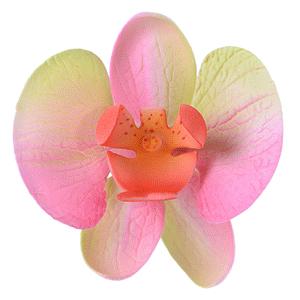 Orchidee  rosa - grün