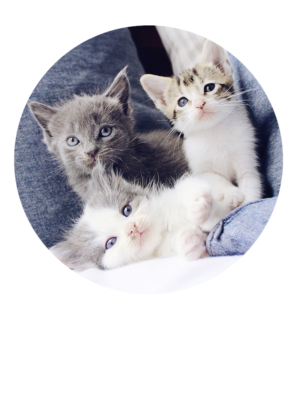 Tortenaufleger Katzen